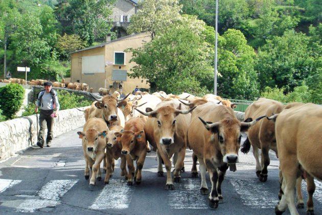 Balades en estives avec les éleveurs de la Rosée des Pyrénées catalanes