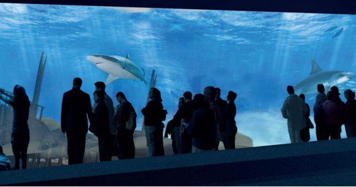 pose-de-la-premiere-pierre-aquarium-canet-en-roussillon
